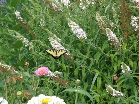 Overland Park Arboretum Visit - Color Inspiration
