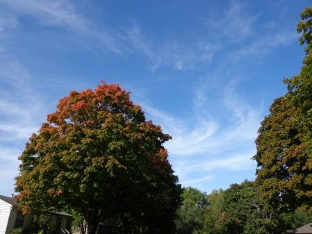 orangetreetop