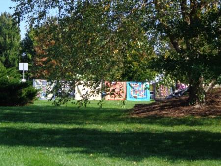 quilts in the distance behind fall leafed tree 2