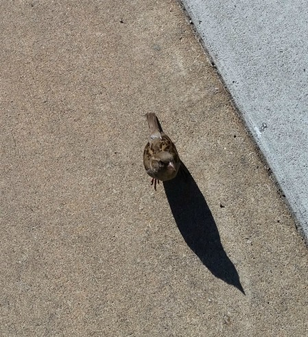 begging bird
